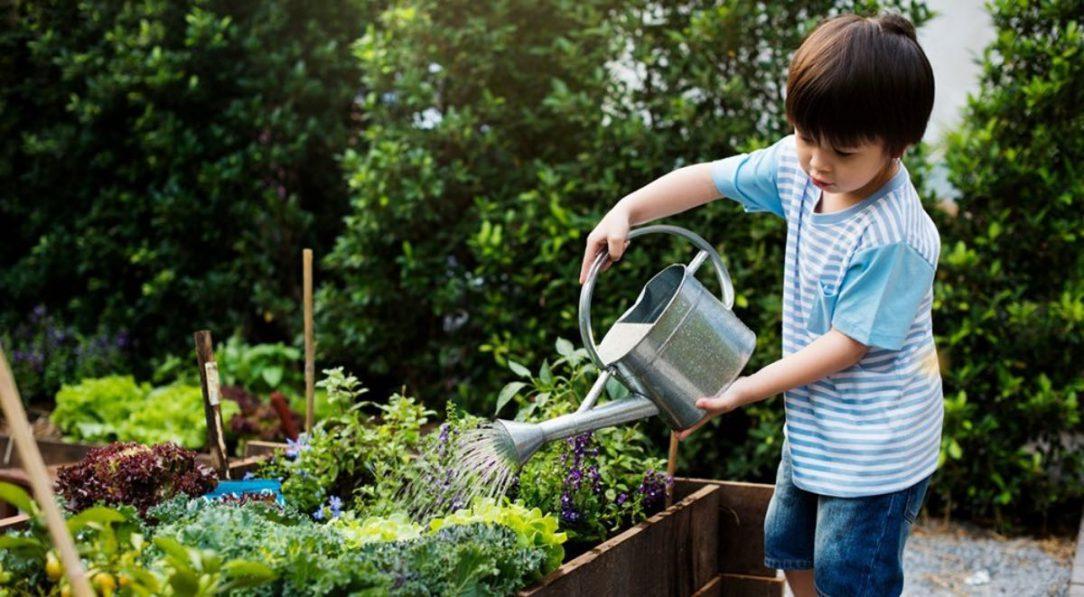 Child watering a garden