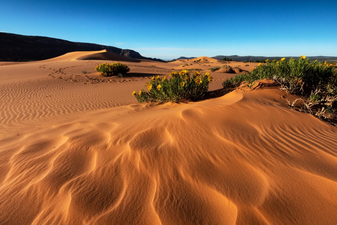 Photo of the Coral Pink Sand Dunes